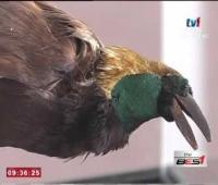 SPM - BINGKISAN PAMERAN NYAWA: BIRD [17 FEB 2016]