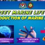 Meet And Greet Marine Life Programme