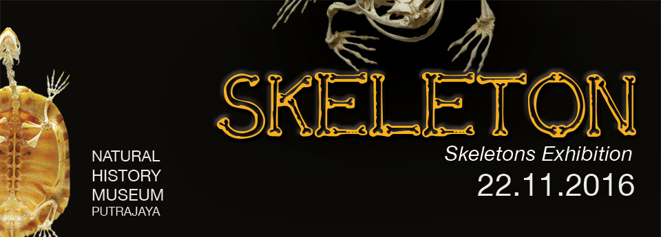 Skeleton Exhibitions at Natural History Museum, Putrajaya